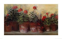Kathleen's Geraniums Framed Print
