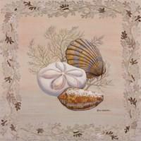 Pastel Shell IV Fine Art Print
