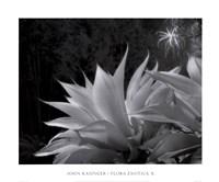 Flora Exotica X Framed Print