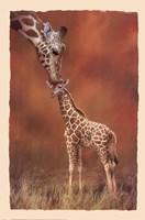 Giraffe Kiss Fine Art Print