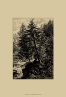 Larch Tree Fine Art Print
