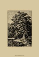 Oak Tree Fine Art Print