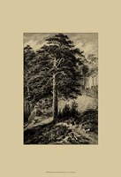 Wild Pine Fine Art Print