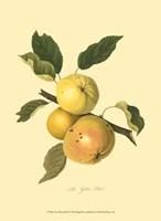 Yellow Elliot Framed Print