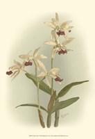 Orchid Garden I Fine Art Print