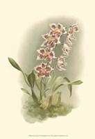Orchid Garden II Fine Art Print