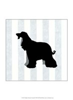 Afghan Hound In Neutral Fine Art Print