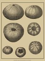 Shells On Khaki I Fine Art Print