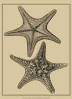 Shells On Khaki II Fine Art Print