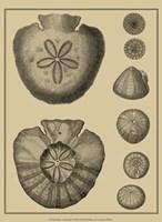 Shells On Khaki III Fine Art Print