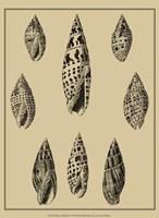 Shells On Khaki IV Fine Art Print