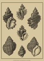 Shells On Khaki V Fine Art Print