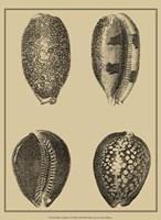 Shells On Khaki VI Fine Art Print