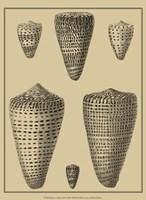 Shells On Khaki VII Fine Art Print