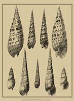 Shells On Khaki IX Fine Art Print