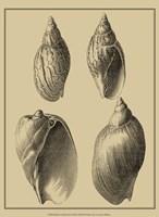 Shells On Khaki XI Fine Art Print