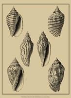 Shells On Khaki XII Fine Art Print