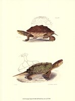 Antique Turtles II Fine Art Print