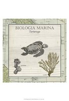 Biologia Marina IV Fine Art Print