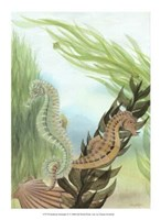 Seahorse Serenade IV Fine Art Print
