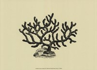 Coral On Khaki III Fine Art Print