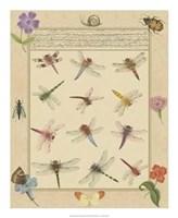 Dragonfly Manuscript II Giclee
