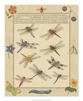 Dragonfly Manuscript III Giclee