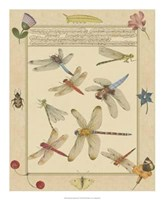 Dragonfly Manuscript IV Giclee