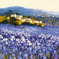 Champs D'iris, Provence Fine Art Print
