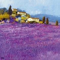 Wild Lavender, Provence Framed Print