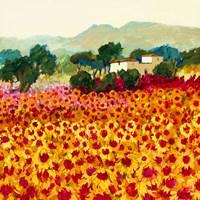 Sunflower Sunset, Tuscany Fine Art Print