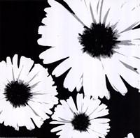 Bw Daisies II Fine Art Print