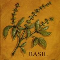 Basil Fine Art Print