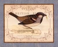British Birds III Framed Print