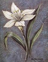 White Lilly Fine Art Print