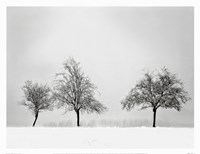 Silhouettes Of Winter II Fine Art Print