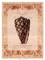 Shell Botanical I Framed Print