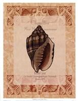 Shell Botanical II Framed Print