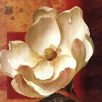 Magnolia Square I Fine Art Print