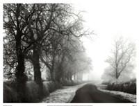 Misty Tree-Lined Road Fine Art Print