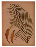 Palm Frond IV Fine Art Print