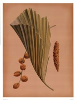 Palm Frond III Fine Art Print