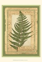 Woodland Scrapbook II Fine Art Print