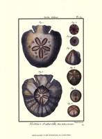 Sea Shells V Fine Art Print