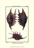 Sea Shells VIII Fine Art Print