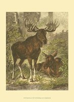 Small Moose Fine Art Print