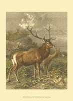 Small Red Deer Fine Art Print