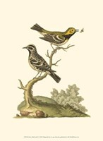 Petite Bird Study II Fine Art Print
