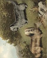 Terriers Fine Art Print