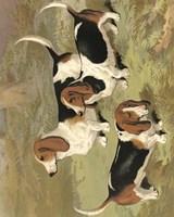 Basset Hounds Fine Art Print